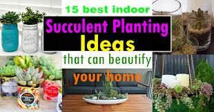 15 best indoor succulent planting ideas that can beautify your home