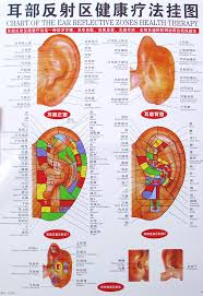 Chinese Ear Chart Us 11 98 Chart Of The Ear Reflective Zones Wallmap Ear Hand Foot Head Acupuncture Map Ustration Of Acupuncture Points Map 64cm 46cm In Massage