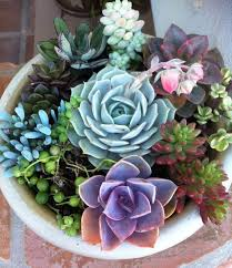 Sunny Simple Life February 2014Succulent Container Garden Plans