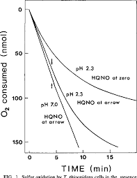 Figure 1 From Oxidation Of Elemental Sulfur To Sulfite By
