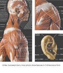 Anatomytools