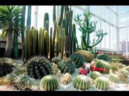 Small Picture Cactus garden design ideas pictures YouTube
