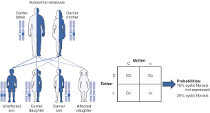 Cystic Fibrosis Inheritance Pattern