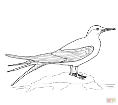 Bird Coloring Pages Free Printable Realistic
