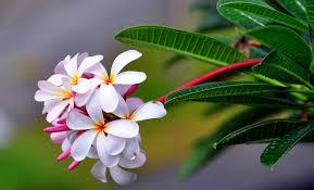 Image result for ?تصاویر گلهای زیبای جهان?