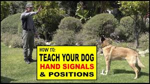 How To Teach Hand Signals And Positions To Your Dog Dog Training Video