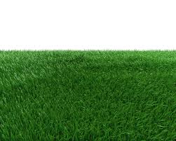 grass transparent background. Artificial Turf Green Meadow Grasses - Field Transparent Background 999*799  Transprent Png Free Download Lawn, Grass Family, Meadow. Grass Transparent Background K