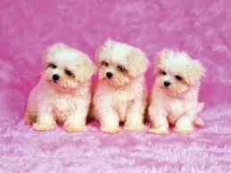 Download Cute Dogs Hintergrundbilder ...