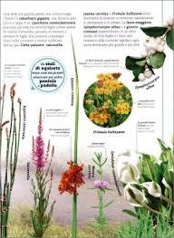 Per quanto riguarda i fiori , sono presenti fiori maschili e fiori femminili , che possono sia alberi: Alberi Foglie Fiori Semi Libro