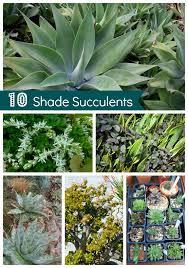 Shade Succulents: Drought Tolerant Garden
