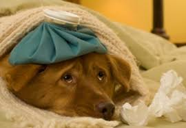 dog sick with a cold