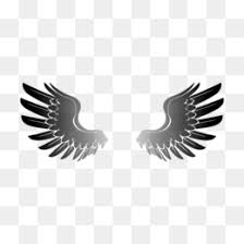 hawk wing clipart. Fine Clipart Redtailed Hawk Drawing Clip Art  Wings Png Download 24002400 Free  Transparent Eagle Download On Hawk Wing Clipart F