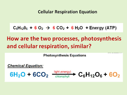 6 how are the two processes photosynthesis and cellular respiration