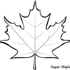 Small Picture Sycamore Maple Leaf Coloring Page Kids Play Color 18422