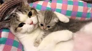 funny cats mother cats protecting