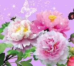 flower wallpaper for mobile phone. Unique Phone Flowers Animated Wallpaper For Desktop Archives  Cute Wallpaper Inside Flower For Mobile Phone O