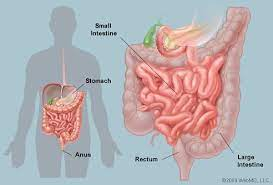 It lies below the ileocecal valve in the lower right quadrant of the abdomen. Intestines Anatomy Picture Function Location Conditions