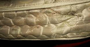 Get Bed Bug Infestation Pics Pics