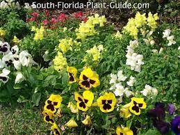 south florida annuals