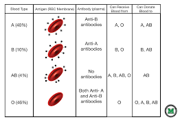 Universal Blood Type Chart Blood Typing B4all Blood Donors In Bangladesh