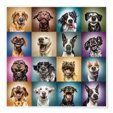 Premium Poster Lustige Hundegesichter Manuela Kulpa