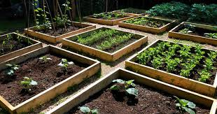 Small Picture Tomatomania Vegetable Garden Design with Stephen Baldonado