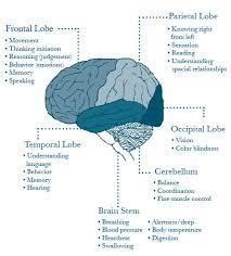 frontal parietal occipital and temporal lobes