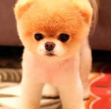Image result for cutest dog in the world