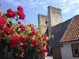 Bildresultat för visby mur rosor