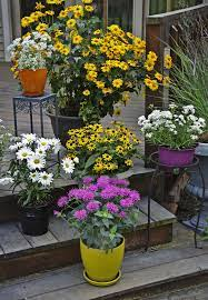View gallery 15 photos skymoon13 getty images. The Complete Guide To Growing Perennials In Containers Walters Gardens Inc