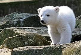Московский зоопарк: в гостях у дикой природы   В городе