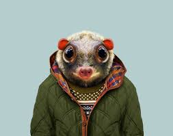 zoo animals in clothes. Delighful Animals Intended Zoo Animals In Clothes V