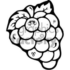 black and white grapes clipart. Delighful Grapes Black And White Grapes Clipart In Black And White Grapes Clipart E