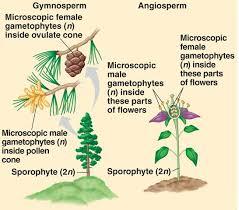 Angiosperm Vs Gymnosperm Venn Diagram Angiosperm Vs Gymnosperm Biology Dictionary