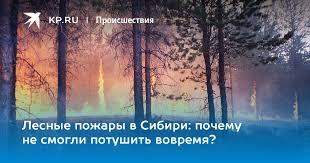 Лесные пожары в Сибири: почему не смогли потушить вовремя?