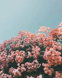 Flower aesthetic, Flower wallpaper ...