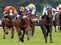 """Résultat de recherche d'images pour """"photo chevaux pmu"""""""