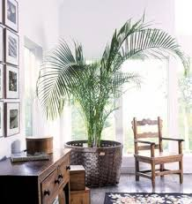 palm tree decor for living room luxury 441 best ⌠tropical west in s of
