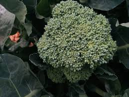 Tbi Blogs 5 Winter Vegetables You Can Grow At Home This Season