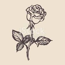 Small Picture Vintage Hand Drawn Rose stock vector art 668737012 iStock
