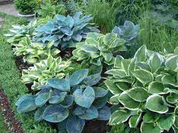 Small Picture 138 best Plant Combos images on Pinterest Gardens Garden ideas