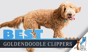 7 best goldendoodle dog hair clippers