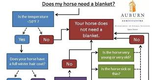 Auburn Us Horse Blanketing How To Is Hilariously Informative
