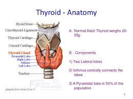 Thyroid Anatomy Thyroid Anatomy Physiology Thyroid Scintigraphy Principles