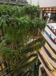 dr patrick blanc s home and work space is surrounded by lush green walls and has an aquarium and his 103m long rainforest chandelier above in bangkok s  on artificial forest fern green wall foliage with patrick blanc creator of vertical gardens says many get it wrong