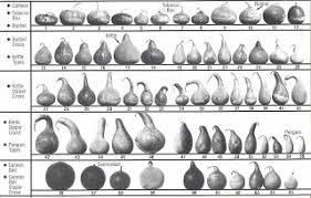 Gourd Identification Chart Pencil And Leaf Leaf Of The Day Pattipan Pepo