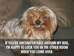 Funny Dog Quotes Unique 48 Funny Dog Quotes SpartaDog Blog