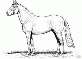 Small Picture Horse Coloring Pages Easy Coloring Pages