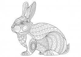 Kleurplaat Konijn Hand Getrokken Vintage Doodle Bunny Vector