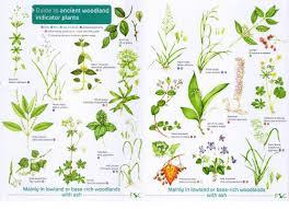 Herb Plant Identification Chart Fsc Ancient Woodland Plants Chart Lizzie Harper